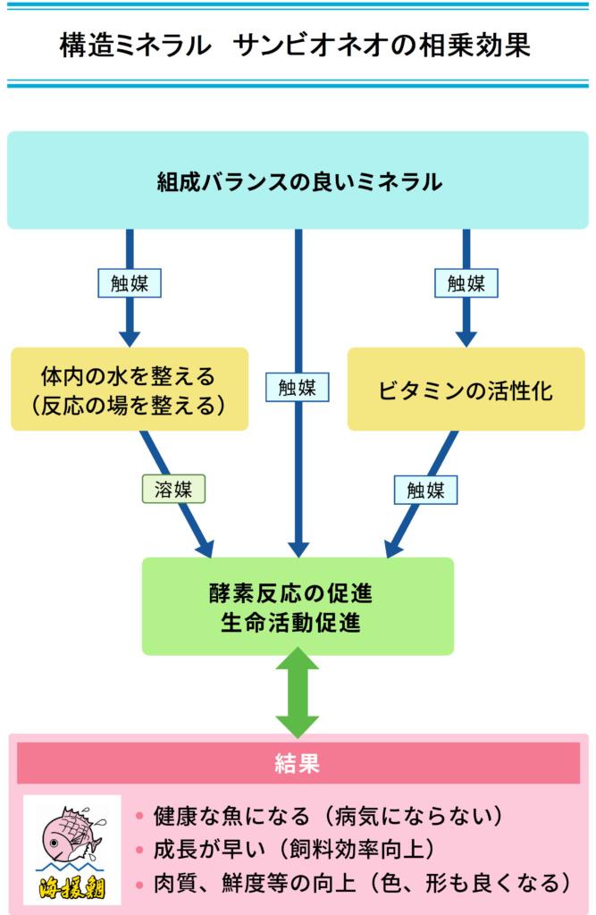 ネオ(構造ミネラル)の相乗効果